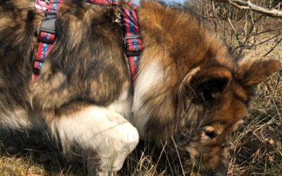 Ostergruß von Schulhund Frida
